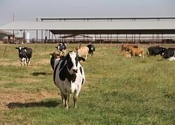 Crise agricole