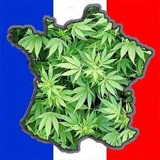cannabis oui