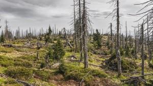 bavarian-forest-3385966__340